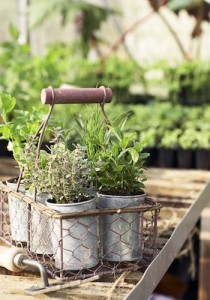 Smart Savings Take it Outside Herb pots in metal basket in greenhouse